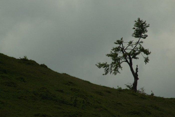 2008_05_28-03