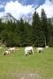 2016_08_12-16 Alpy Julijskie fot. ť. Tr©bacz (43)